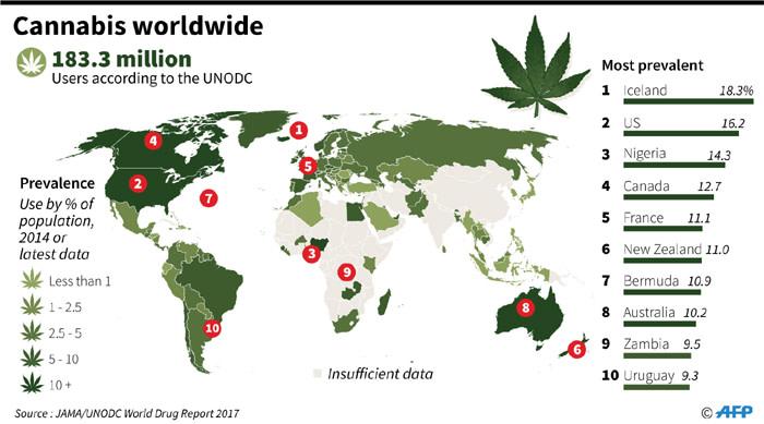 consumidores de cannabis